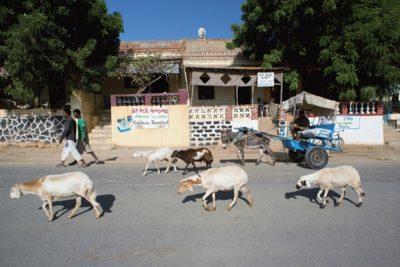 eritrea_193