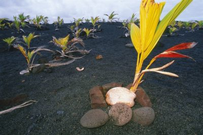 hawaii_big_island_105