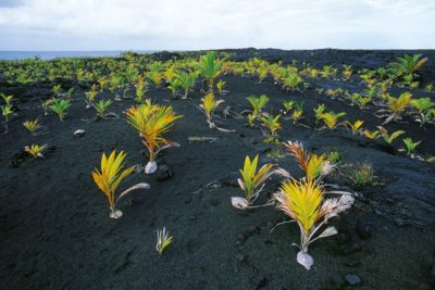 hawaii_big_island_106