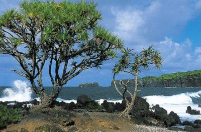 hawaii_maui_019