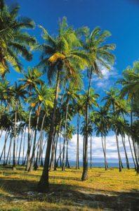 hawaii_molokai_022