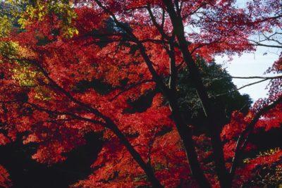japan_024