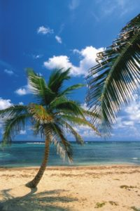 kayman_island_001