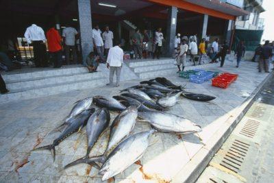 maldives_animals056