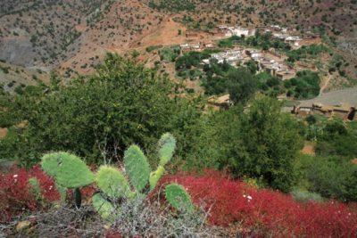 morocco_246