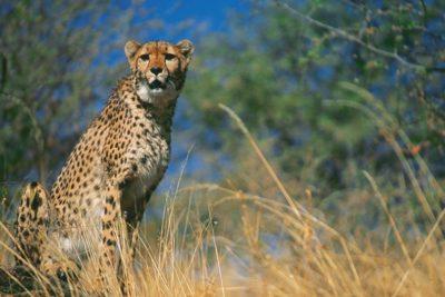 namibia_022