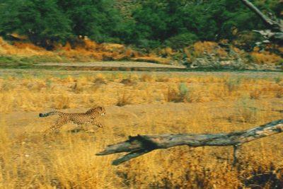 namibia_054