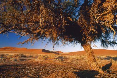 namibia_107