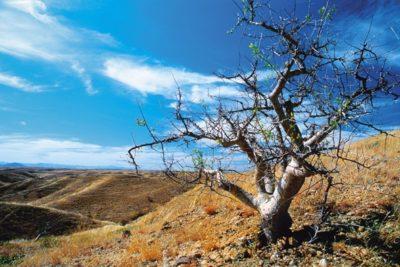 namibia_157