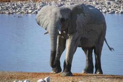 namibia_animals156