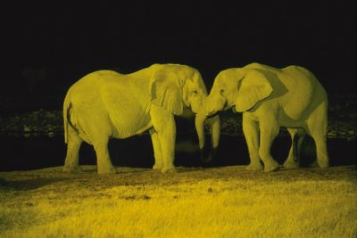 namibia_animals158
