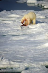 north_pole_008