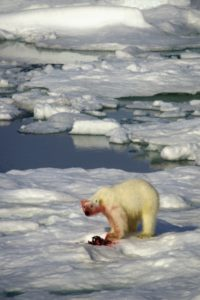 north_pole_009