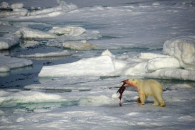 north_pole_013