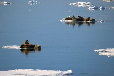 north_pole_060