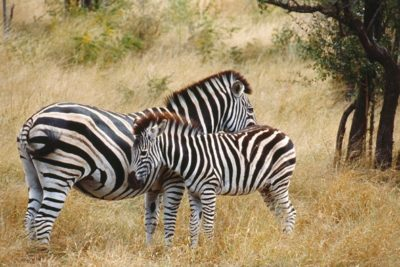 south_africa_123