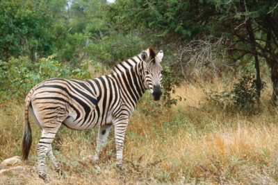 south_africa_124