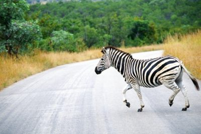 south_africa_126