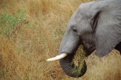 south_africa_127
