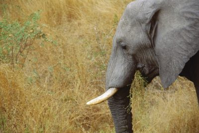 south_africa_128