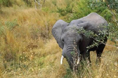 south_africa_130
