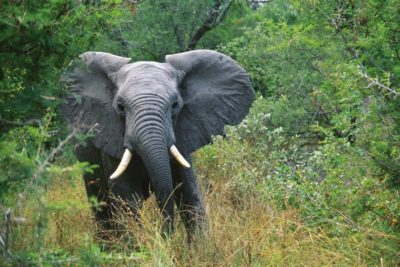 south_africa_131