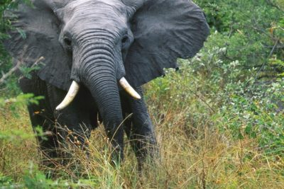 south_africa_131a