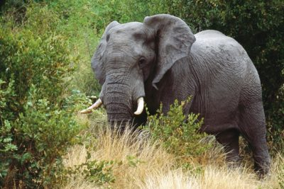 south_africa_132