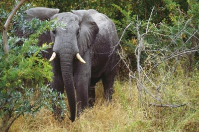 south_africa_133
