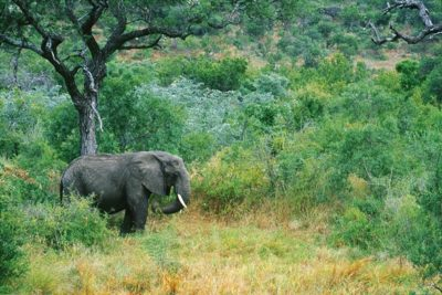south_africa_134