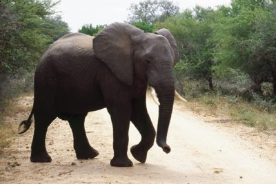 south_africa_136