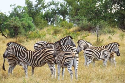 south_africa_138