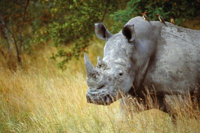 south_africa_147