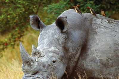 south_africa_147a