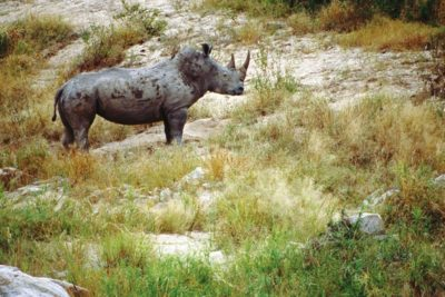 south_africa_148