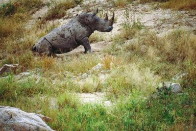 south_africa_149