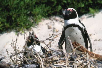 south_africa_151