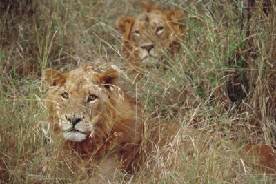 south_africa_155