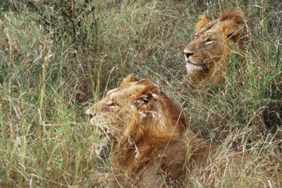 south_africa_156