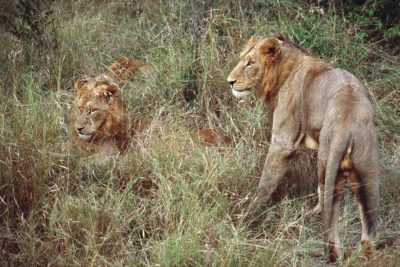 south_africa_157