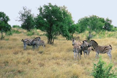 south_africa_163