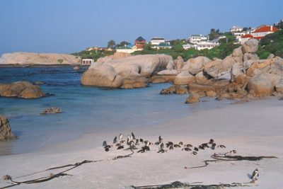 south_africa_196
