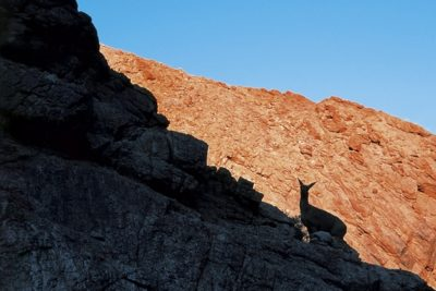 south_africa_217