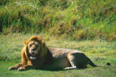 tanzania_animals169