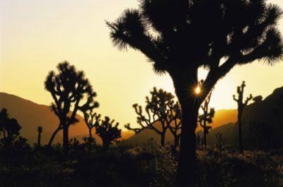 usa_california_029k