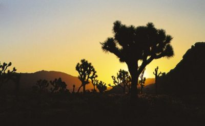 usa_california_030