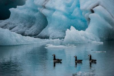 iceland_1254