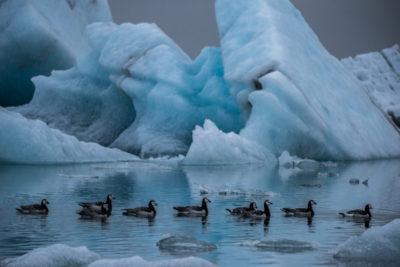 iceland_1255