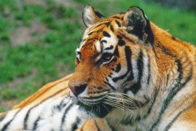 cr_animals2_020-2