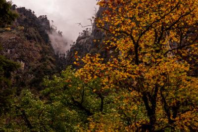bhutan_118